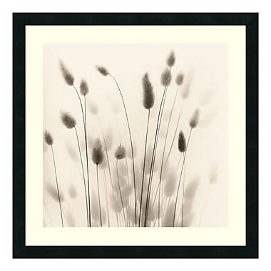 Amanti Art – Reproduction encadrée de « Italian Tall Grass No. 1 » par Alan Blaustein, 26 x 26 po (DSW114185)
