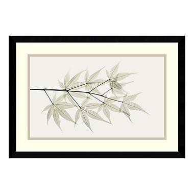 Amanti Art – Imprimé encadré « Japanese Maple » par Albert Koetsier, 23 x 16 po (DSW177801)