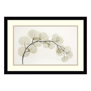 Amanti Art – Imprimé encadré « Eucalyptus II » par Albert Koetsier, 23 x 16 po (DSW177802)