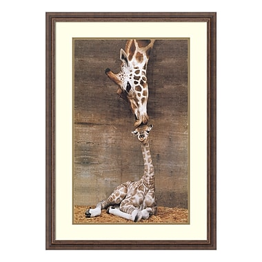 Amanti Art – Reproduction encadrée de « Makulu – Giraffe First Kiss » par Ron D'Raine, 27 x 39 po (DSW177420)