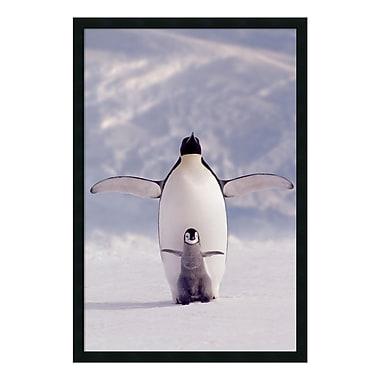 Amanti Art – Imprimé encadré « Pingouin et son bébé », 26 x 38 po (DSW169882)