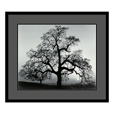 Amanti Art – Imprimé encadré « Oak Tree, Sunset City, California, 1962 » par Ansel Adams, 29 x 25 po (DSW01392)