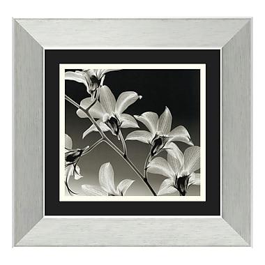 Amanti Art – Imprimé encadré « Orchid Denrobium » par Steven N. Meyers, 15 x 14 po (DSW01124)