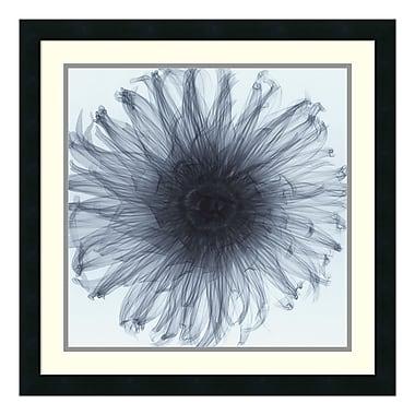 Amanti Art – Imprimé encadré Dahlia par Steven N. Meyers, 24 x 24 po (DSW01127)