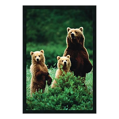 Amanti Art Framed Art Print Three Bears, 26