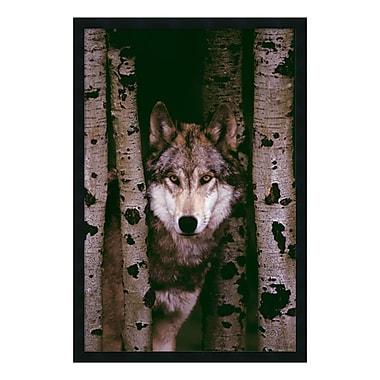 Amanti Art – Imprimé encadré « Loup gris », 26 x 38 po (DSW577200)
