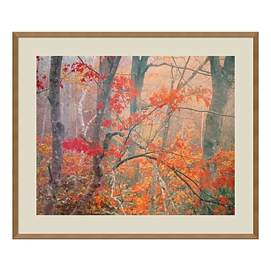 Amanti Art – Imprimé encadré « Maple Trees in Fog Near Eagle Lake, Acadia National Park », William Neill, 33 x 28 po (DSW573747)