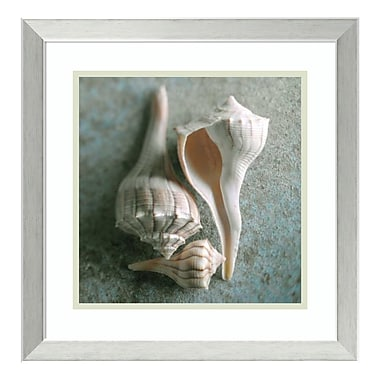 Amanti Art Framed Art Print 'Whelks' by Glen & Gayle Wans, 18