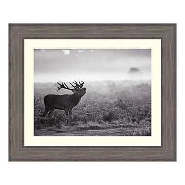 Amanti Art Framed Art Print 'Morning Call (Elk)' by Joe Reynolds, 34