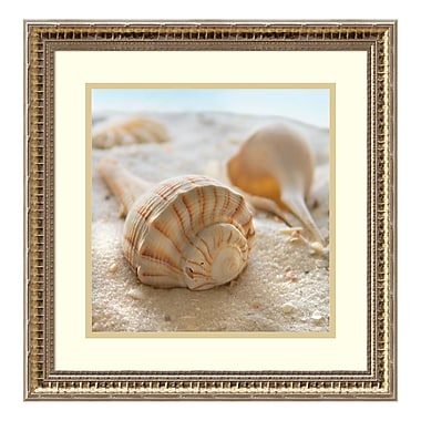 Amanti Art Framed Art Print 'Beachy Shell III' by Donna Geissler, 19