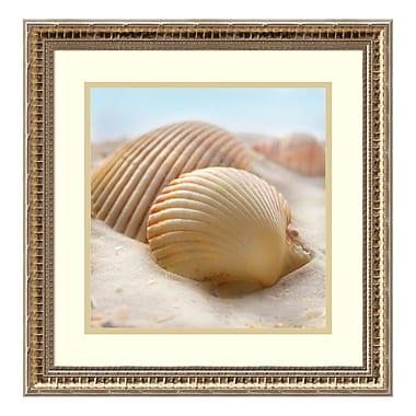 Amanti Art – Imprimé encadré, « Beachy Shell I » par Donna Geissler, 19 x 19 po (DSW3908943)