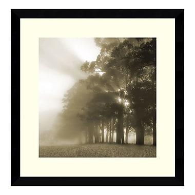 Amanti Art – Imprimé encadré, « Misty Forest » par Steven Mitchell, 17 x 17 po (DSW3908991)