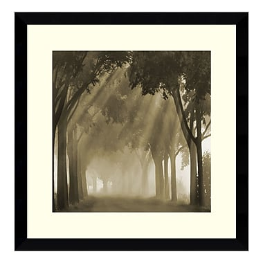 Amanti Art Framed Art Print 'Misty Grove' by Steven Mitchell, 17