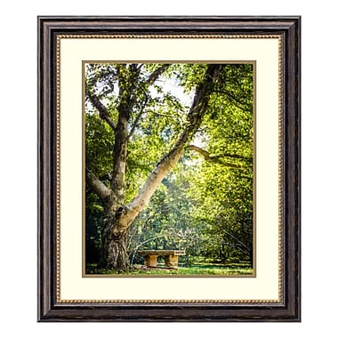 Amanti Art Framed Art Print 'A Place to Ponder (Tree)' by Matt Marten, 25
