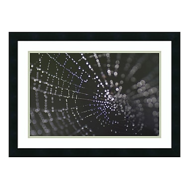 Amanti Art Framed Art Print 'Kaleidoscope (Spider Web)' by John Cioci, 26