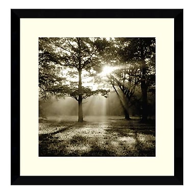 Amanti Art Framed Art Print 'Wild Forest' by Steven Mitchell, 17