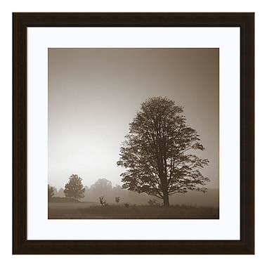 Amanti Art Framed Art Print 'In180_1 (Tree)' by PhotoINC Studio, 22