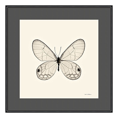 Amanti Art Framed Art Print 'Butterfly I BW Crop' by Debra Van Swearingen, 16
