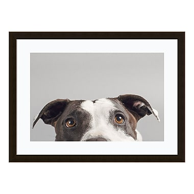 Amanti Art Framed Art Print 'Ruby (Dog)' by Susan Sabo, 31