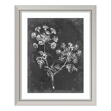 Amanti Art Framed Art Print 'Slate Floral I' by Ethan Harper, 26