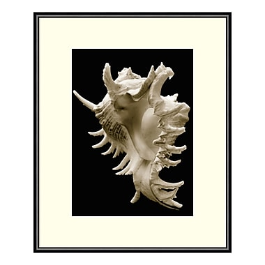 Amanti Art Framed Art Print 'Murex' by Sondra Wampler, 11
