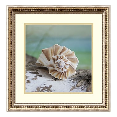 Amanti Art Framed Art Print 'Shell and Driftwood I' by Donna Geissler, 19