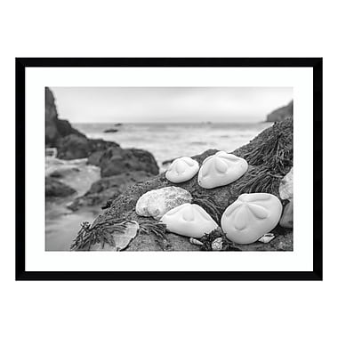 Amanti Art Framed Art Print 'Rodeo Beach Shells 4' by Alan Blaustein, 29
