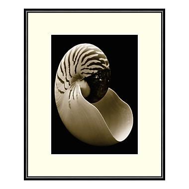 Amanti Art Framed Art Print 'Nautilus' by Sondra Wampler, 11