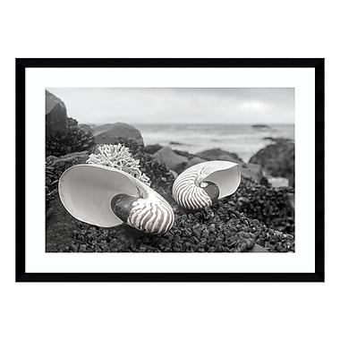Amanti Art Framed Art Print 'Rodeo Beach Shells 2' by Alan Blaustein, 29