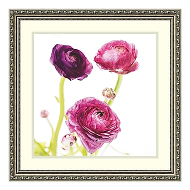 Amanti Art Framed Art Print 'Spring Ranunculus I' by Laura Marshall, 23