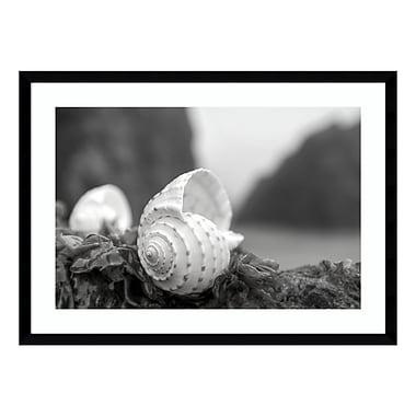 Amanti Art Framed Art Print 'Rodeo Beach Shells 1' by Alan Blaustein, 29