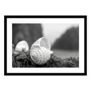 "Amanti Art Framed Art Print 'Rodeo Beach Shells 1' by Alan Blaustein, 29"" x 21"" (DSW3894387)"