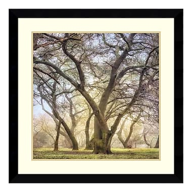 Amanti Art Framed Art Print 'Golden Dawn' by Dianne Poinski, 33