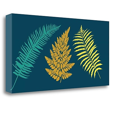 Tangletown Fine Art 'Ferns' Graphic Art Print on Canvas; 16'' H x 32'' W