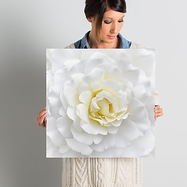 Willa Arlo Interiors 'White Rose' Photographic Print on Wrapped Canvas; 18'' H x 18'' W x 2'' D