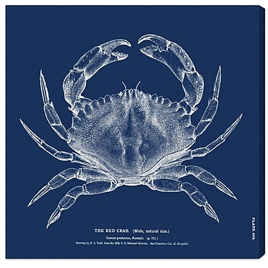 Breakwater Bay 'The Red Crab - Blue' Graphic Art on Canvas; 43'' H x 43'' W x 1.5'' D