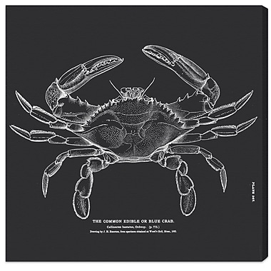 Breakwater Bay 'The Common Blue Crab' Graphic Art on Canvas; 36'' H x 36'' W x 1.5'' D