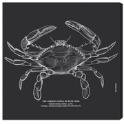 Breakwater Bay 'The Common Blue Crab' Graphic Art on Canvas; 20'' H x 20'' W x 1.5'' D
