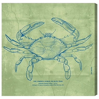 Highland Dunes 'The Common Blue Crab - Aqua' Graphic Art on Canvas; 36'' H x 36'' W x 1.5'' D
