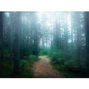 Loon Peak 'Lindsten - The forest of secrets' Photographic Print on Wrapped Canvas