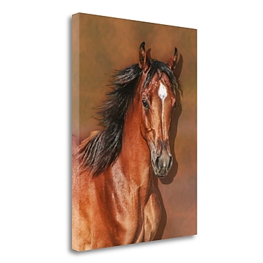 Loon Peak 'Steph''s Filly' Photographic Print on Wrapped Canvas; 26'' H x 20'' W