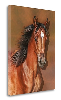 Loon Peak 'Steph''s Filly' Photographic Print on Wrapped Canvas; 32'' H x 24'' W
