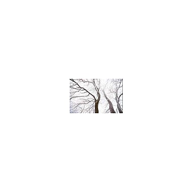East Urban Home 'Up the Trees' Photographic Print on Wrapped Canvas