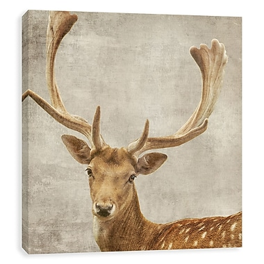 Artissimo Deer, Gallery Wrapped Canvas, 22W x 22H x 1.5D Wall Art