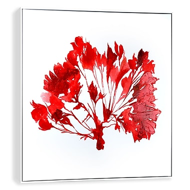 Artissimo Red Coral IV, Gallery Wrapped Canvas, 35W x 35H x 2D Wall Art