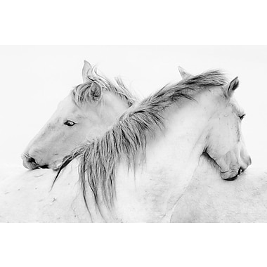 Union Rustic 'Stas - Horses' Photographic Print on Wrapped Canvas