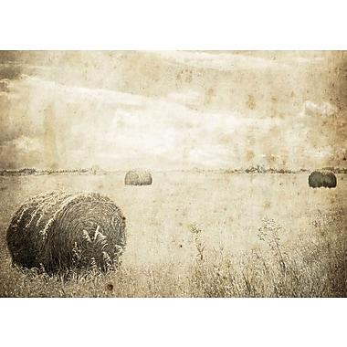 Union Rustic 'Hay Bales in the Field' Photographic Print on Canvas; 16'' H x 24'' W