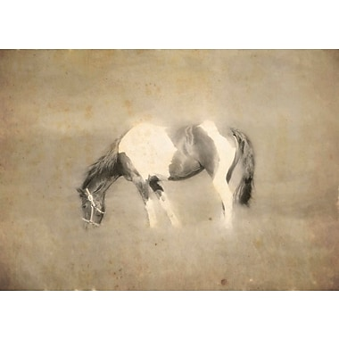 Union Rustic 'Painted Horse' Photographic Print on Canvas; 16'' H x 24'' W