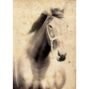 Union Rustic 'Stallion Horse' Photographic Print on Canvas; 24'' H x 16'' W