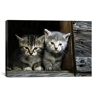 East Urban Home Kittens Photographic Print on Canvas; 18'' H x 26'' W x 0.75'' D